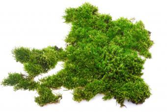 Closeup of pile of fresh moss