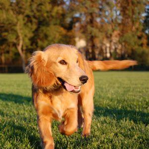 Dog enjoying the summer