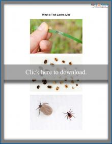 What a tick looks like printable