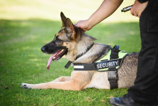 When Do You Need Security And Protection Services