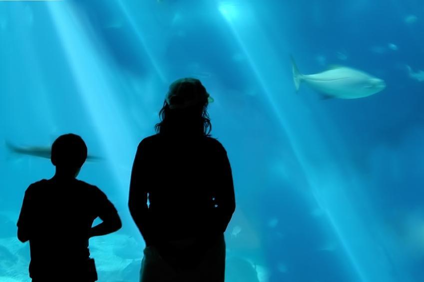 https://cf.ltkcdn.net/sanfrancisco/images/slide/10198-849x565-aquarium.jpg