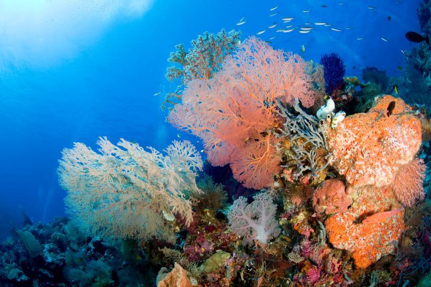 https://cf.ltkcdn.net/sanfrancisco/images/slide/10221-849x565-5corral-reef.jpg