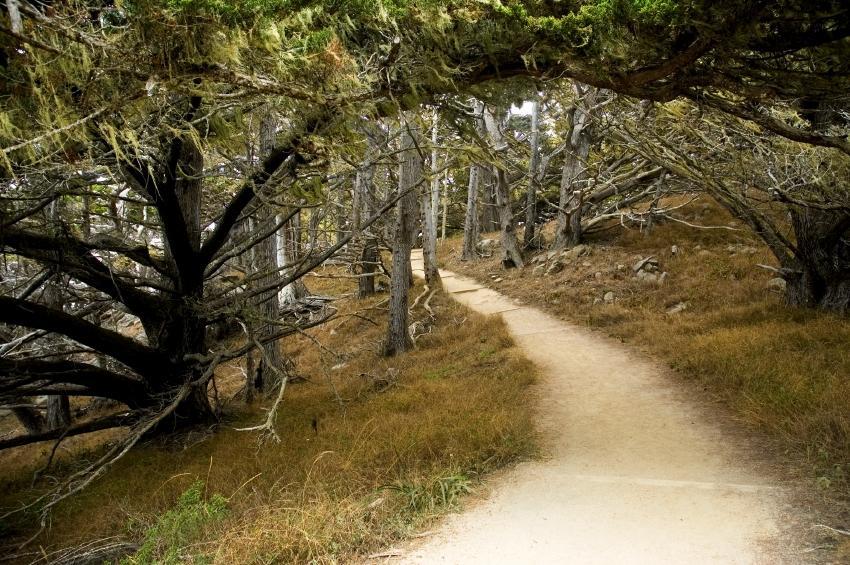 https://cf.ltkcdn.net/sanfrancisco/images/slide/10280-850x565-hiking_path.JPG