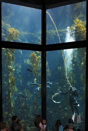 https://cf.ltkcdn.net/sanfrancisco/images/slide/11386-574x850r1-kelp.jpg