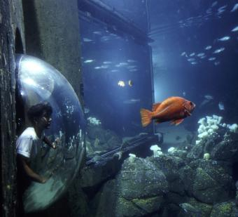 Interview with the Monterey Bay Aquarium