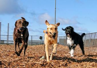 Dogs at Half Moon Bay Dog Park
