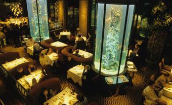 Waterbar interior with lit aquariums