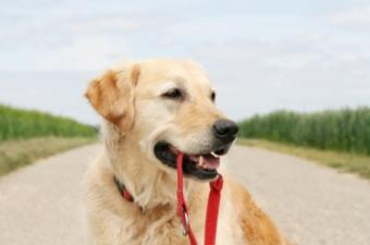Dog_with_leash.jpg