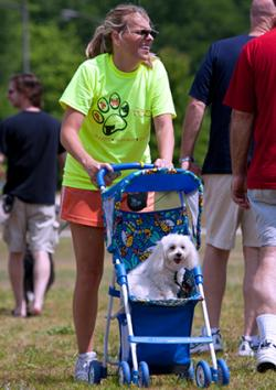 Woman pushing dog in baby stroller
