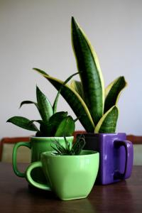 Planters made from thrift store mugs