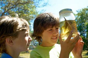 Boys looking at pond life in jar