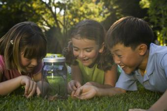 Children looking at bug jar