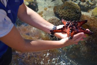 Holding large star fish