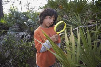 Looking through magnifying glass at plant