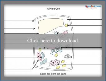 Plant worksheet