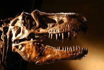T-Rex-Dinosaur-Skull.jpg