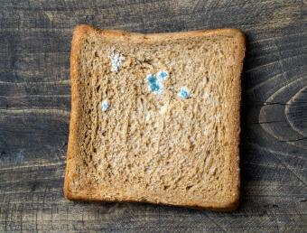 Mold on bread