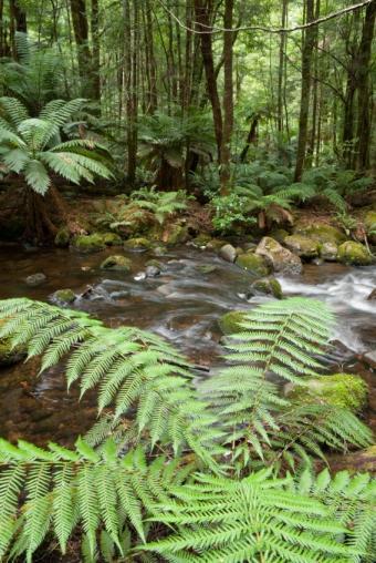 https://cf.ltkcdn.net/science/images/slide/209639-567x847-rainforesttrees.jpg