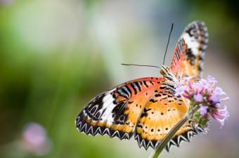https://cf.ltkcdn.net/science/images/slide/209640-850x563-rainforestbutterfly.jpg