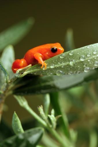 https://cf.ltkcdn.net/science/images/slide/209641-566x848-rainforestfrog.jpg