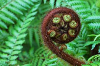 https://cf.ltkcdn.net/science/images/slide/209643-849x565-rainforestfern.jpg