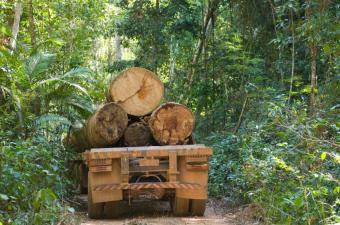 https://cf.ltkcdn.net/science/images/slide/209644-850x563-rainforestcutting.jpg
