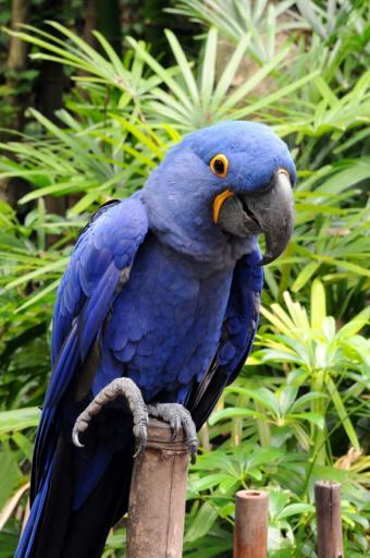 https://cf.ltkcdn.net/science/images/slide/209646-565x850-rainforestbird.jpg