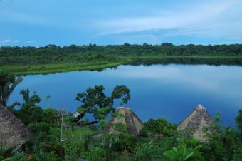 https://cf.ltkcdn.net/science/images/slide/209647-850x565-rainforestbasin.jpg