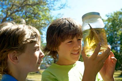 Boys looking at pond life in jar