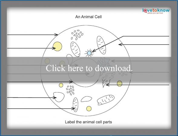 fill in the blank animal cell worksheet