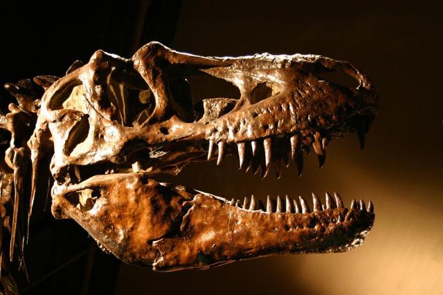 dating methods for dinosaur fossils