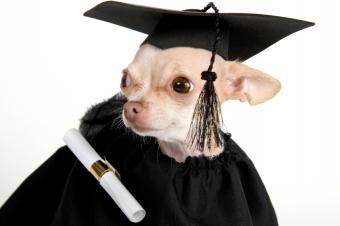 https://cf.ltkcdn.net/scrapbooking/images/slide/143908-849x565r1-dog-with-diploma.jpg