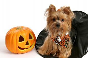 https://cf.ltkcdn.net/scrapbooking/images/slide/143911-849x565r1-dog-halloween.jpg