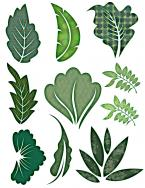 leaves scrapbook clip art
