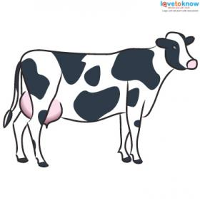 Farm Animal cow