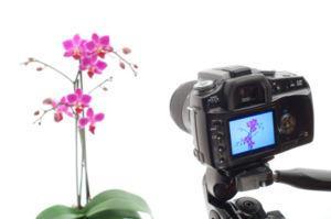 Photographytipsforscrapbookers.jpg