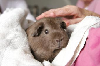 Resident holding a therapy pet