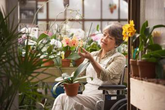 Woman in wheelchair tending flowers