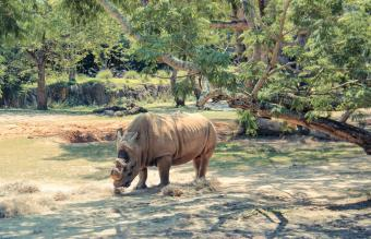 Rhino in Orlando