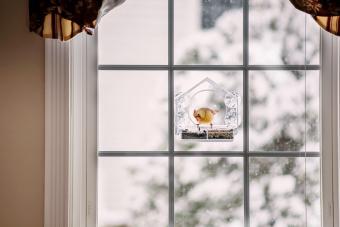 Cardinalis bird perched on plastic glass window feeder
