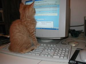 Cat on a keyboard watching a computer monitor
