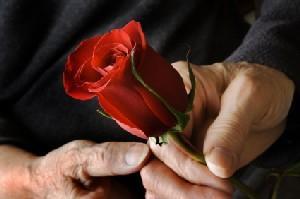 Elderly man handing an elderly woman a rose