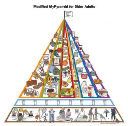 The Modified MyPyramid for Seniors