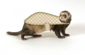 ferret coat pattern