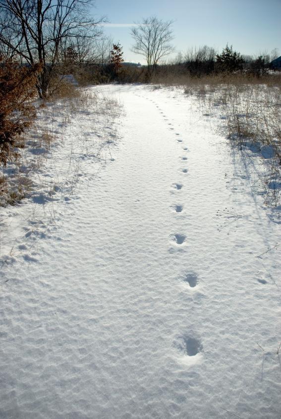 https://cf.ltkcdn.net/ski/images/slide/1093-567x847-DeerFTPT.jpg