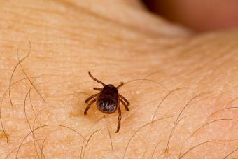 Be careful of tick bites!
