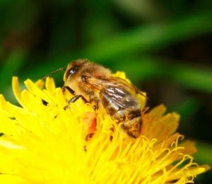 Treatment for a Wasp or Bee Sting