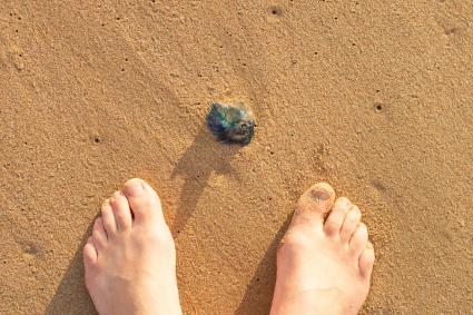 Feet near a Blue bottle jellyfish (Physalia physalis)