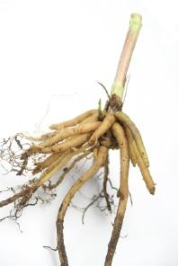 Valerian root is a natural sleep aid