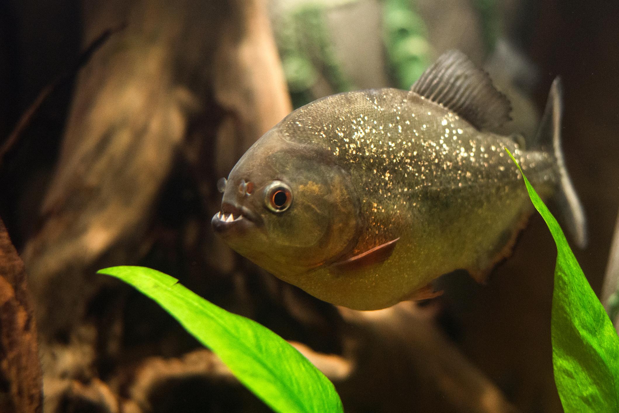 Do Fish Have Teeth Lovetoknow